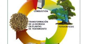 biomasamini