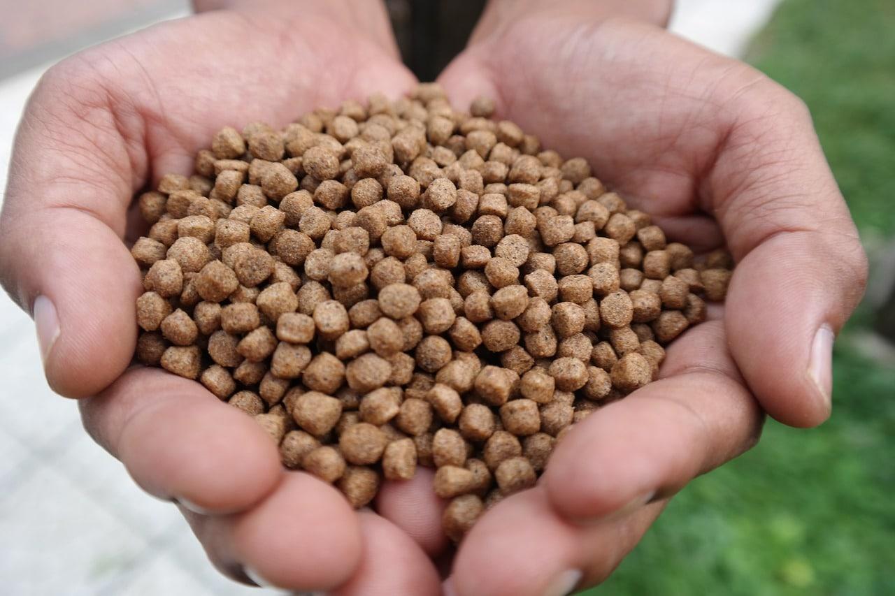 Aumento de la biomasa: Tendencia creciente para la sostenibilidad