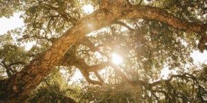 biomasa_cuidado_medioambiental