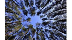 bosques-biomasa