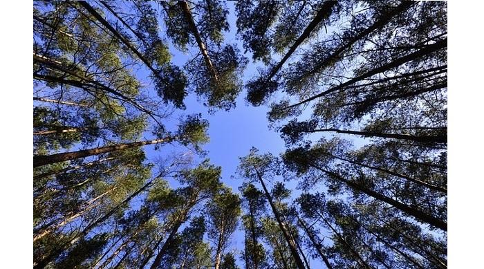 Impulsar la biomasa para prevenir los incendios forestales