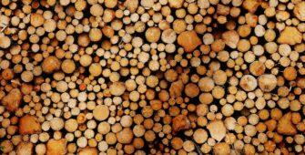 cómo aprovechamos la biomasa
