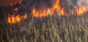 incendios_biomasa_greenheiss