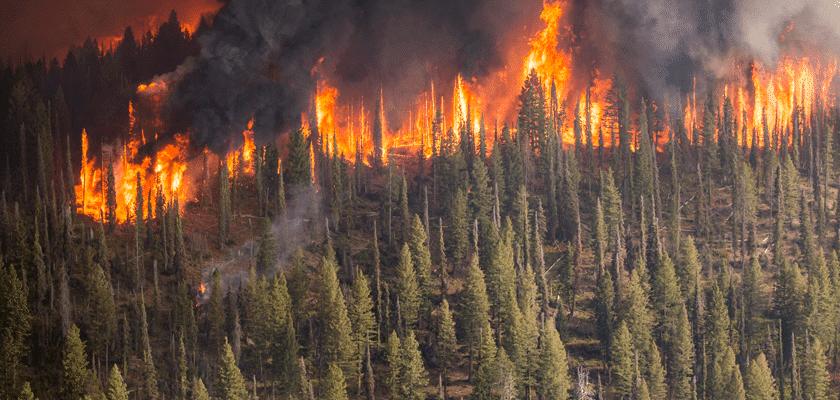 La biomasa es sostenible, previene incendios y es un revulsivo económico