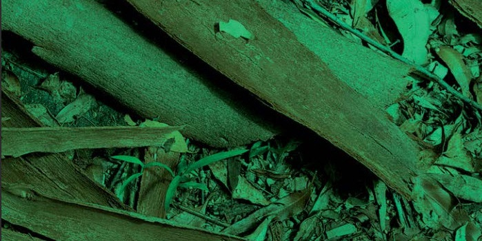 ¿Cuanta materia de biomasa hay en España?