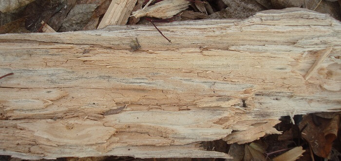 Tipos de le a para estufas de biomasa greenheiss - Tipos de estufas de lena ...